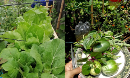 The rise of the plantitos and plantitas and how it opens food security